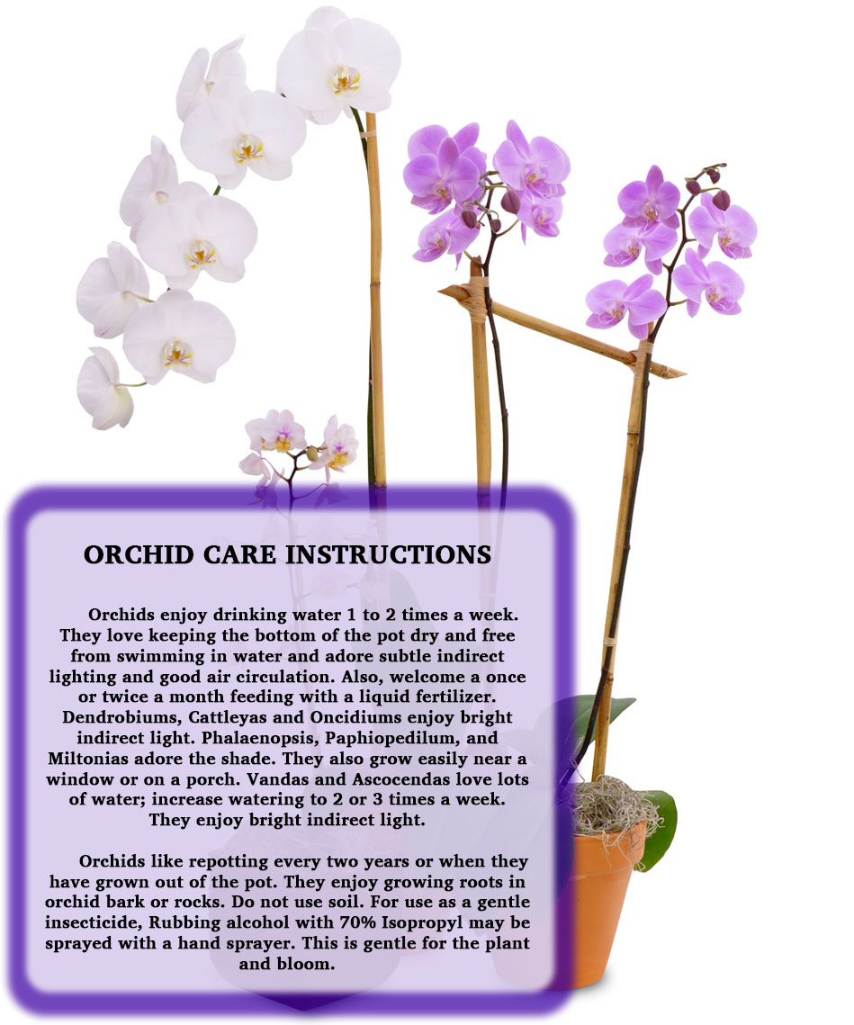 Orchid Care Instructions