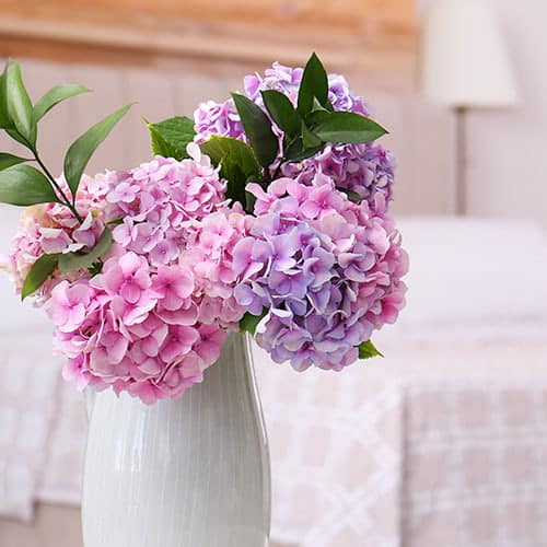 Lavender and light pink hydrangea in white vase with 2 greenery stems