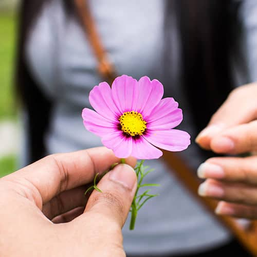 close up shot of a man giving a woman a single pink flower with a yellow center