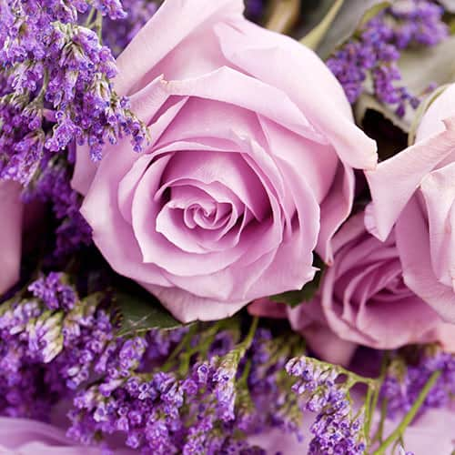 Up close photo of lavender rose with lilacs too