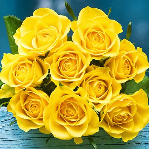 Up close photo of 9 bright yellow roses