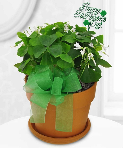 Shamrock Splash by Conklyn's Florist
