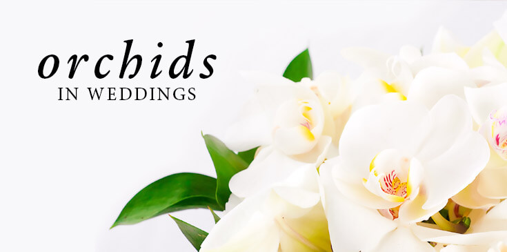 orchidwedding-grayminimal-blog